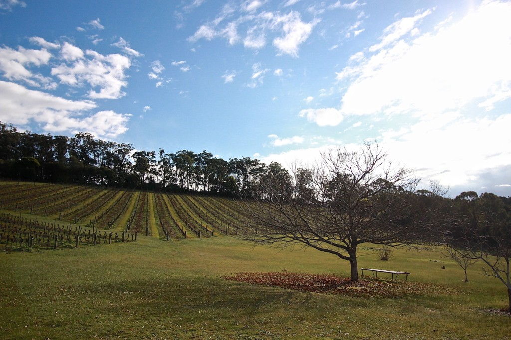 MGC Gembrook Hill Vineyard